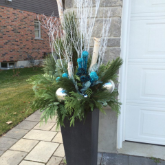Colourful winter planter with birch branches to add curb appeal